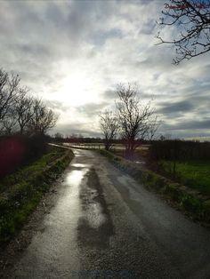Chemin au Migron fin d' après midi d' hiver 2016-02-02 - 113118434504119207618 - Picasa Albums Web