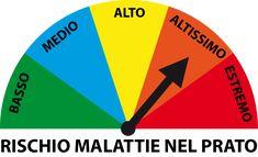 Programma Annuale di Prevenzione delle Malattie Fungine del Prato   Bestprato Chart, Portion Plate