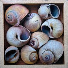 Colored pencil- Nicole Caulfield
