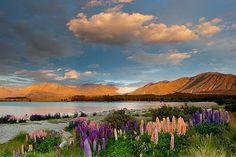 Lake Tekapo, NZ- Turquoise water, Godley river, backdrop of southern alps
