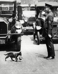 """Picture taken circa 1925 when a NYC policeman stopped traffic to allow a mama cat and her baby to cross the street."""