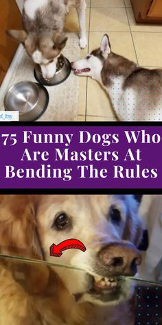 Although, honestly, it's hard to get mad at a dog, even if they do sometimes cross the line. #awesome #amazing #facts #funny #humor #interesting #trending #viral #news #entertainment #memes #facts Funny Humor, Funny Dogs, Animals And Pets, Cute Animals, Amazing Facts, Amazing Things, Girl Photography Poses, Inspiring Things, Cool Pins