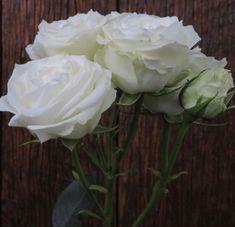 Types Of White Flowers, White Lotus Flower, Types Of Roses, All Flowers, Wholesale Flowers Online, Wholesale Florist, Wholesale Roses, White Spray Roses, White Roses