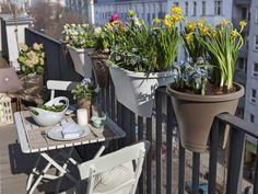 Το καλοκαίρι είναι η ιδανική εποχή για να έχεις ένα ανθισμένο μπαλκόνι, ή κήπο. Ο καιρός είναι ζεστός και σε προϊδεάζει για όμορφα πρωινά με ήλιο, τα οποία περνάς χαζεύοντας τη θέα από το σπίτι