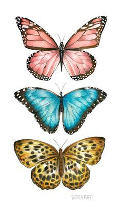 Artes da Ilustradora Bianca Pozzi   MariMoon Wings, Butterfly, Vintage, Bananas, Diy, Blog, Masha And The Bear, Butterflies, Parakeet