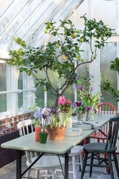 Styled by Selina Lake this greenhouse is also a dining space to relax in.