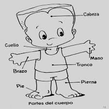Preschool - Primary School Worksheets The Human Body Parts in Spanish. Human Body in Spanish printable worksheets designed for preschool and primary school Body Preschool, Preschool Spanish, Elementary Spanish, Spanish Activities, Spanish Classroom, Preschool Activities, Preschool Colors, Spanish Lessons For Kids, Learning Spanish For Kids