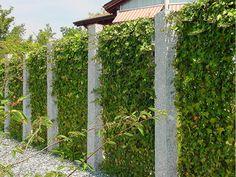 Beton-Grün-Zaun Landscape Design, Garden Design, House Design, Privacy Landscaping, Green Fence, Iron Gates, Entrance Gates, Backyard, Outdoor Structures