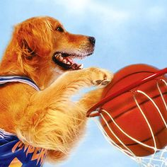15 Reasons Golden Retrievers Are Your Best Friends Air Bud Movies, Cute Puppies, Cute Dogs, Dog Health Tips, Disney Dogs, Childhood Movies, Cute Dog Pictures, Golden Retrievers, Great Friends