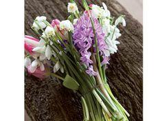 Bucaneve e violette sono i fiori invernali