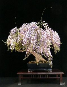 Wisteria- By: Heike van Gunst