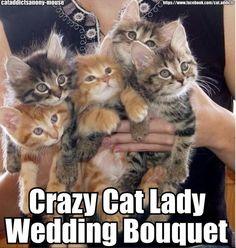 Crazy cat lady wedding bouquet!