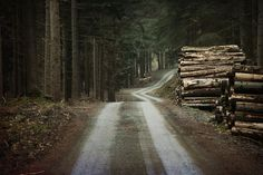 by aeron photography - road through the woods