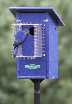 Bird-Safe® Bluebird House & Pole with Noel Guard