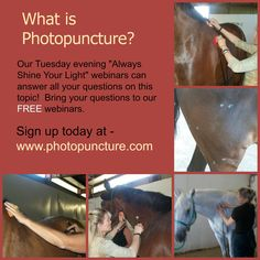 Find out how Photopuncture works for you and your equine companions.