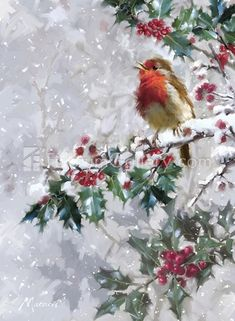 weihnachten bilder Robin On Holly 2 by The Macneil Studio - Christmas Scenes, Diy Christmas Tree, Vintage Christmas Cards, Christmas Pictures, Winter Christmas, Christmas Wreaths, Christmas Ornaments, Christmas Ideas, Christmas Costumes