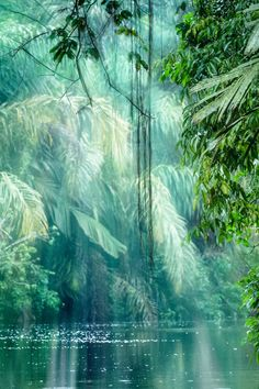 heaven-ly-mind:  Into The Rainforest