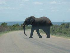 afrika africa krugerparken kruger park south afrika sydafrika swaziland