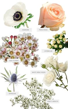 Forget Wine Pairings Today We Are Pairing Bouquets With Weddings! - Expolore the best and the special ideas about Wine pairings Cheap Wedding Flowers, Bridal Flowers, Flower Bouquet Wedding, Flower Bouquets, Cheap Flowers, Blush Flowers, Wedding Flower Arrangements, Floral Arrangements, Flower Chart