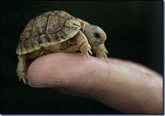 itty bitty turtle...so darn cute