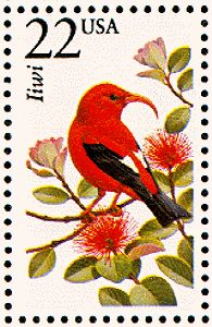 "The ʻiʻiwi, or scarlet Hawaiian honeycreeper is a ""hummingbird-niched"" species of Hawaiian honeycreeper. It is one of the most plentiful species of this family, many of which are endangered or extinct."