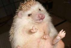 "The next time someone asks you if you've ever been flipped off by a hedgehog, now you can say, ""Yes!"""