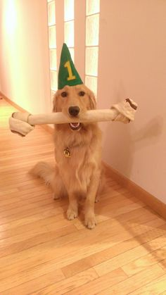 It's My First Birthday! Cute Dog Pictures.
