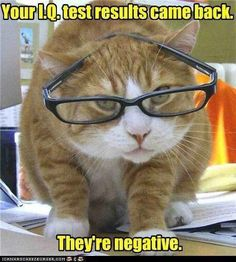 Something my cat kids would say to me. ...