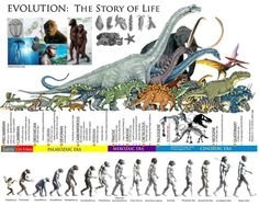 Evolution: The Story of Life Pseudo Science, Science And Nature, Dinosaur Time, Human Evolution, Evolution Science, History Timeline, Extinct Animals, Prehistoric Creatures, World History