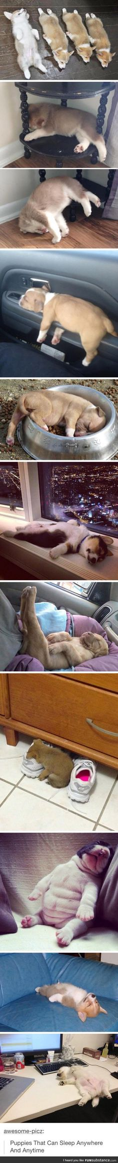 Puppies can sleep anywhere
