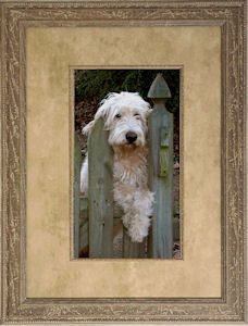 Save memories of your favorite pooch with custom framing at #thegreatframeup! www.thegreatframeup.com