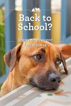 6 Ways to Prevent Pet Boredom and Loneliness When the Kids Go Back to School. Pets are creatures of habit, and they love routine! So when summer ends and the family returns to the old routine of school and work, the transition can be tough. Here are some tips to make the change a bit smoother and establish a new routine that the furry family members can get used to. via /kristenlevine/