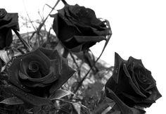 Cada rosa que me regalas es vida para mi cada momento que estas junto a mi es vida para mi porque sin ti nada soy y porque tu eres mi vida... mi príncipe el ángel mio.... no quiero momentos quiero eternidad junto a ti.