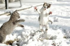 Funny Kittens Play in the Snow