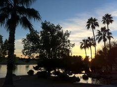 Freestone Park - Gilbert Arizona