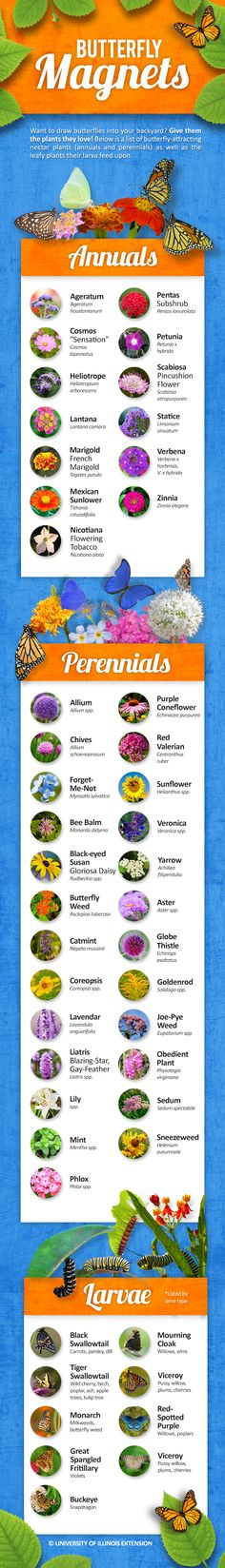 Want more butterflies in your yard? Plant the nectar plants they love! Here's a great list of butterfly-attracting annual and perennial plants — including those needed for butterfly larvae. #infographic #garden #gardening