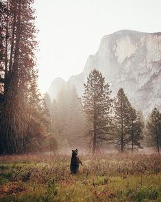 Check out @joshua_currie's spotlight for his favorite Bay Area adventures and the story behind this shot in #Yosemite. Press the link in our bio to read more by theoutbound