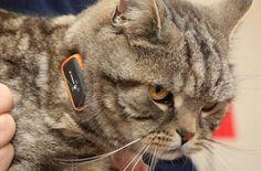 Представлен кошачий ошейник, который умеет превращать мяуканье в человеческую речь (видео)