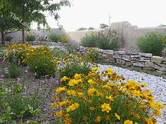 Landscape inexpensively/ plans and ideas. I like the wild flowers.