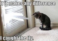 My cat is a fly killer extraordinaire.  ;)