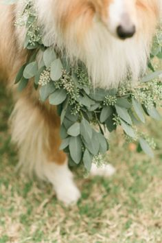 Wedding garland for a dog | Jen + Ashley Photography | http://burnettsboards.com/2014/01/plan-inspiration-shoot/