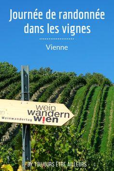 Une activité insolite à Vienne : la journée de randonnée dans les vignes, pour partir à la découverte du vignoble viennois et ses producteurs. #Vienna #Wien #vineyard Holidays, Blog, Grape Vines, Vineyard, Travel, Holidays Events, Holiday, Blogging, Vacation