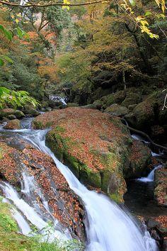 Kikuchi vally #japan #kumamoto Kumamoto, Kyushu, Beautiful Waterfalls, Beautiful Landscapes, Travel Box, Travel Wallpaper, Plunge Pool, Fukuoka, Nihon