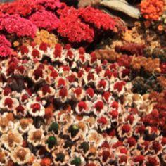 Flores do Cerrado
