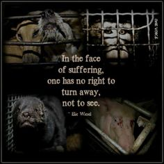 IN THE FACE OF SUFFERING, ONE HAS NO RIGHT TO TURN AWAY. NOT TO SEE. Please always be proactive. Let's all live to see every animal with a home.