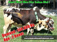 Sub Bhai Batao Kitnay Ka Lain ? Join us on www.fb.com/Startfun Visit us www.BakraMandiPakistan.com
