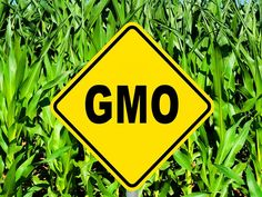 Genetically Modified Foods (GMO) Linked to Tumors, Allergies and Early Death