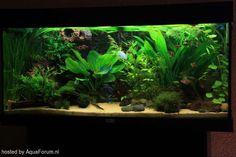 Juwel 180 ltr. ons vissenbestand, van renate en eric. | Foto-album | Het Nederlandstalig AquaForum