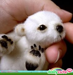 baby polar bear. awwww. so precious
