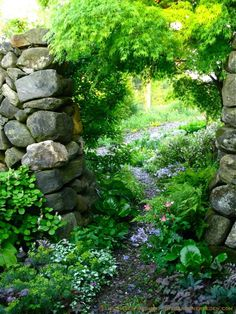 The Blue Green Dragon (Acer palmatum x dissectum 'Seiryu') Arches Over Michaela's Secret Garden Door in the foothills of the Green Mountains in Southern Vermont. ~ TheGardenersEden.com